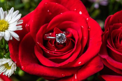 初めて迎える妻との結婚記念日に、きらめく一輪のバラを贈ろう