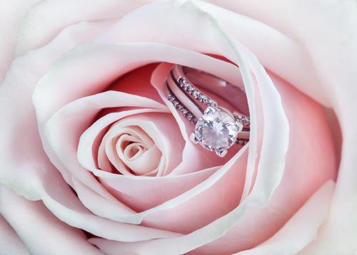 EIKA_婚約指輪_プロポーズ_サプライズ_指輪以外_指輪なし_ダイヤモンドプロポーズ_バラ_ローズ