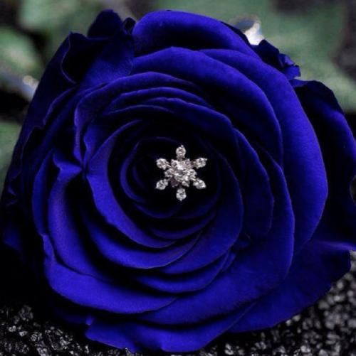 プロポーズ-花-青バラ