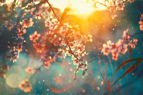 春_プロポーズ_季節_桜